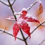 Hình ảnh động tình yêu tuyết rơi tuyệt đẹp vào mùa đông