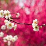 Hình Nền Phong Cảnh Mùa Xuân Đẹp & Hình Nền Mùa Xuân 1/2019