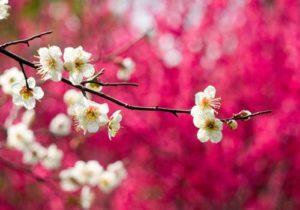 Hình nền phong cảnh mùa Xuân đẹp – Hình nền 1/2017