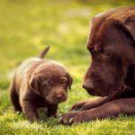 Hình ảnh gia đình chó mẹ và chó con cực dễ thương