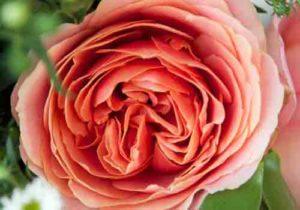 """""""Mê tít"""" bộ hình nền hoa tuyệt đẹp cho điện thoại"""