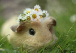 Hình nền động vật đáng yêu, ngộ nghĩnh và dễ thương nhất