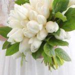 Hình ảnh hoa Tulip trắng & Ý nghĩa của hoa Tulip màu trắng là gi?