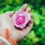 Hoa Đẹp 20/10, Giỏ Hoa & Lẵng Hoa Đẹp Mừng Ngày Phụ Nữ Việt Nam
