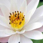 99+ STT & Lời Phật Dạy Về Chân Lý, Triết Lý Cuộc Sống Tâm Thanh Tịnh
