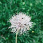 STT Đà Lạt – 30+ Những Câu Status & Tản Mạn Hay Về Đà Lạt Mộng Mơ