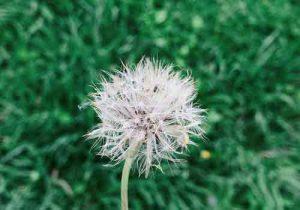 Stt Đà Lạt – Những câu status hay về Đà Lạt mộng mơ