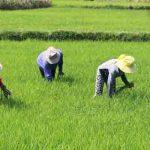 Top 10+ Bài Thơ, Câu Thơ Hay Về Người Nông Dân & Nỗi Lòng Của Họ