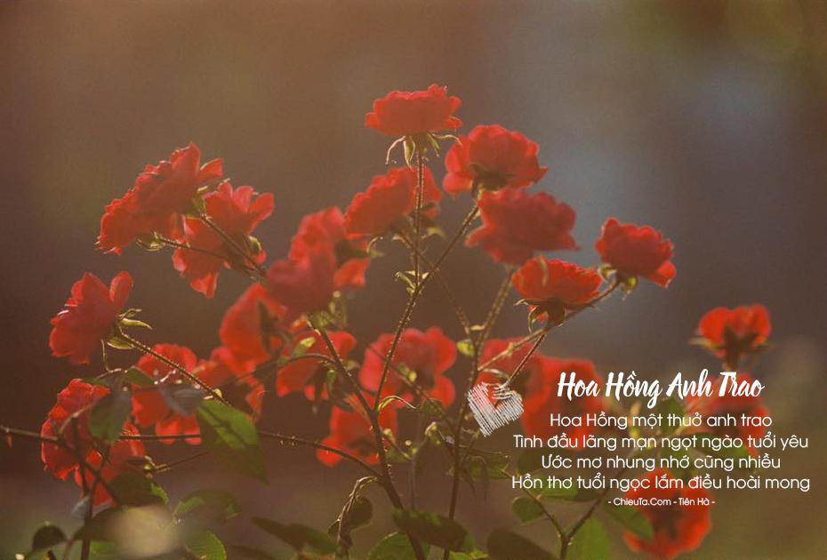 Thơ Về Hoa Hồng - Chùm Thơ Ngắn Hay Về Loài Hoa Hồng & Tình Yêu