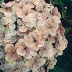 STT Về Hoa – Những Câu Nói Hay Về Các Loài Hoa Tình Yêu & Ý Nghĩa