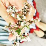 Thơ Hoa Tam Giác Mạch, Những Bài Thơ Hay Về Mùa Hoa Tam Giác Mạch