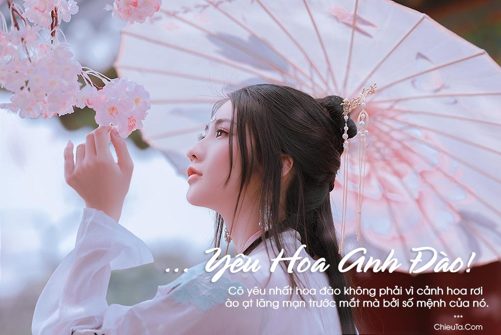 25+ Bài Thơ Hoa Anh Đào Vẻ Đẹp Sinh Động Trong Tâm Hồn Thi Sĩ